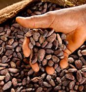 Fves de cacao